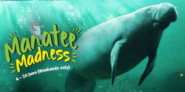 Here's Your Chance to Dive With the Manatees via Wildlife Reserves Singapore