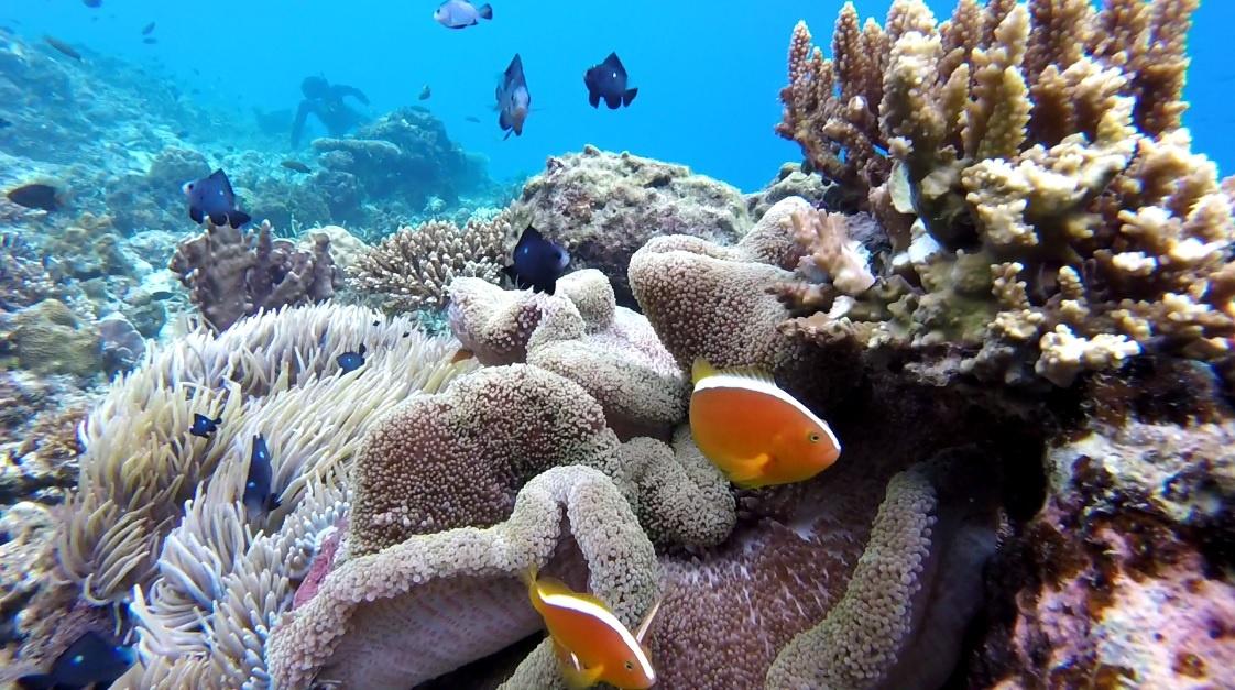 Matinloc snorkelling area