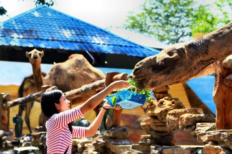 Feed wildlife at the Johor Zoo