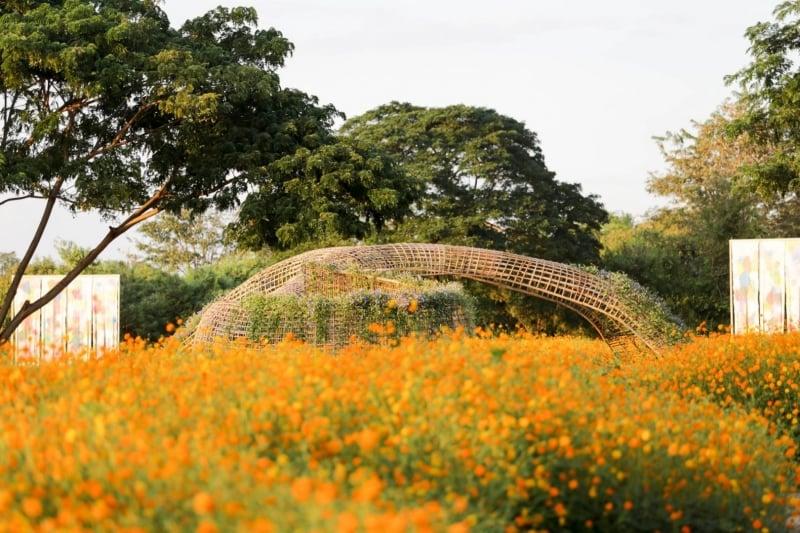 Jim Thompson Farm thailand best flower fields