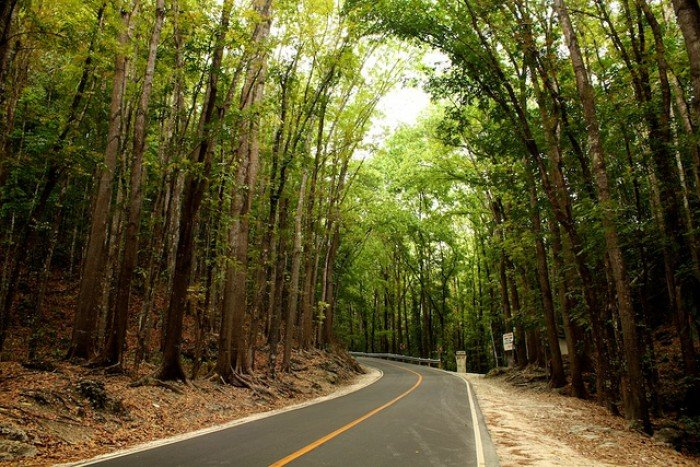 Bilar Man-made Forest Bohol