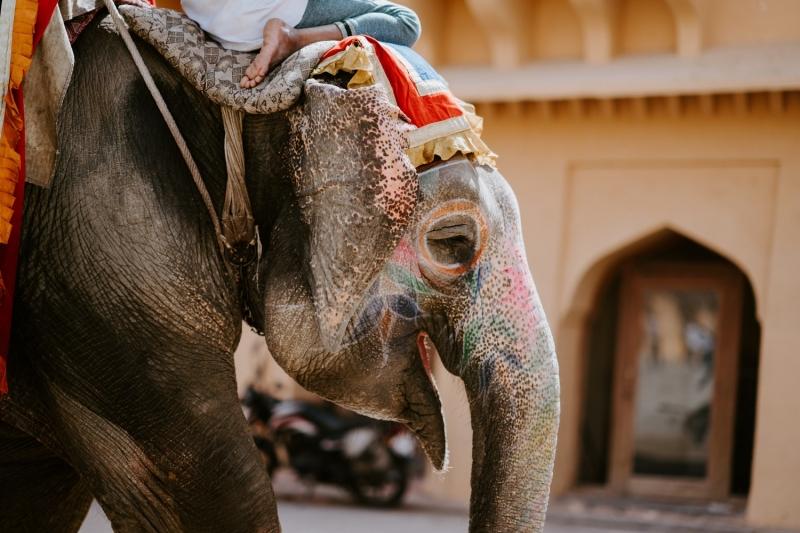 wildlife tourism ethics