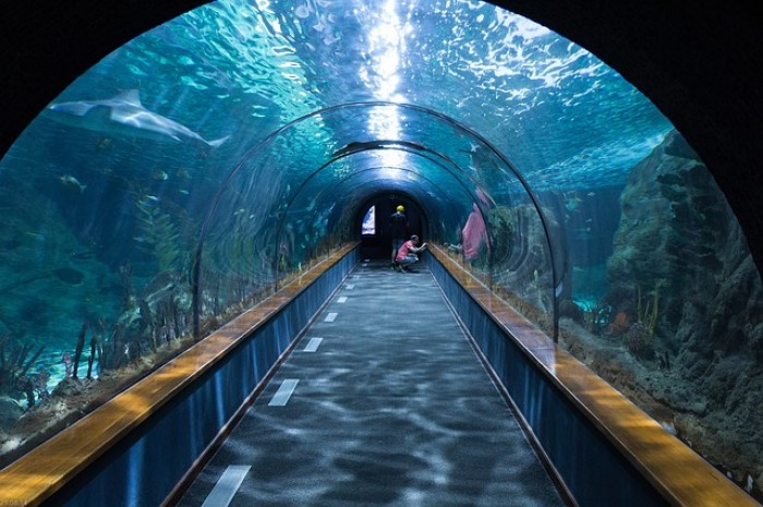 SEA LIFE Sydney Aquarium, Sydney