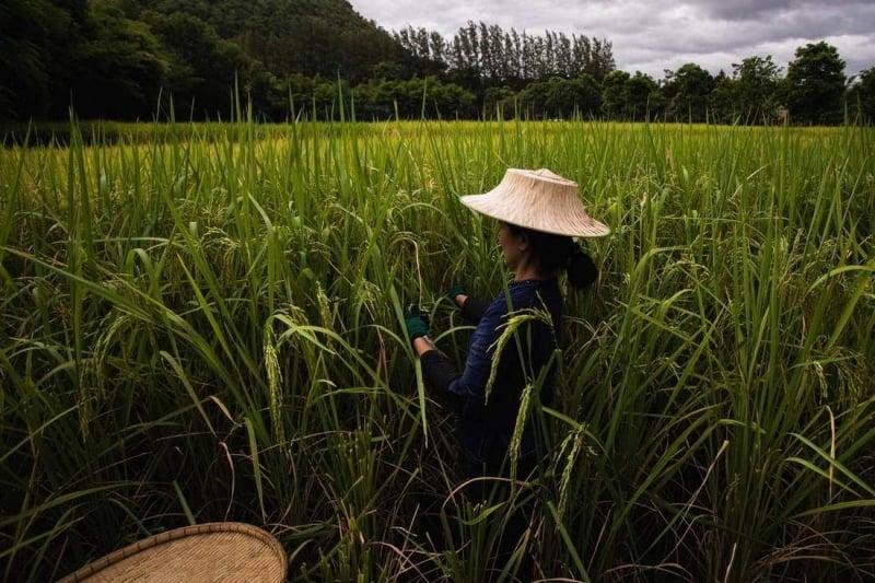 Jim Thompson Farm thailand