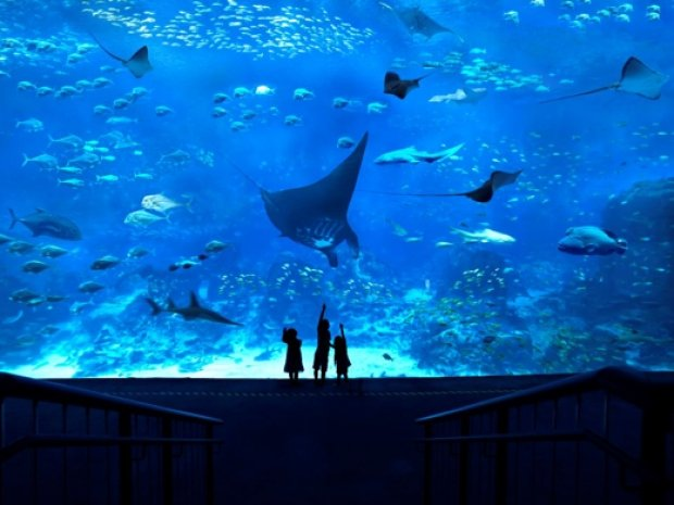 S.E.A Aquarium Adult One-Day Ticket + more at SGD40 with OCBC