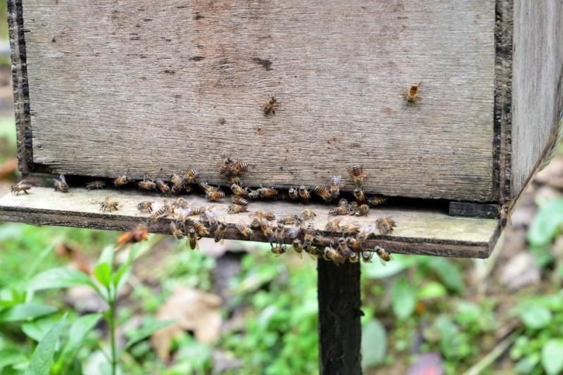 honey farms in cameron highlands