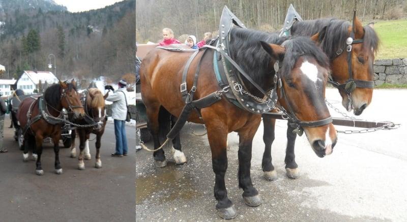 horse carriage to Neuschwanstein Castle
