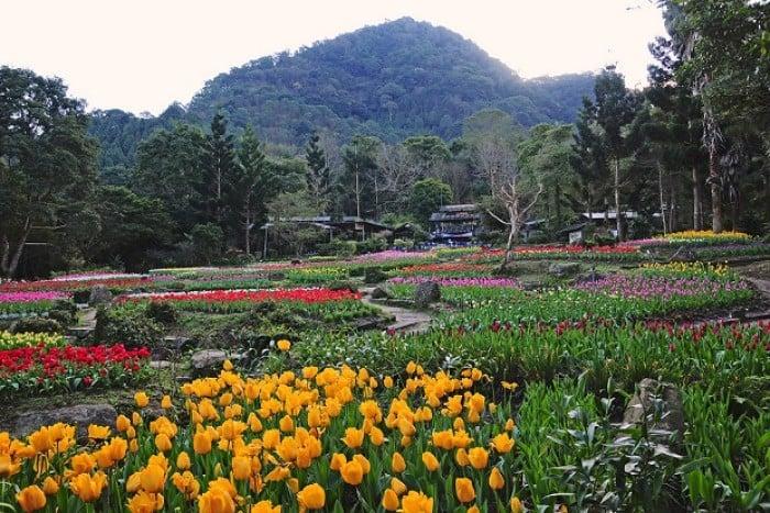 Taoyuan Fairy Valley