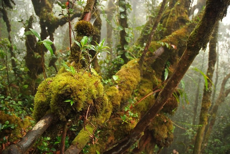 Mossy Forest of Cameron Highlands