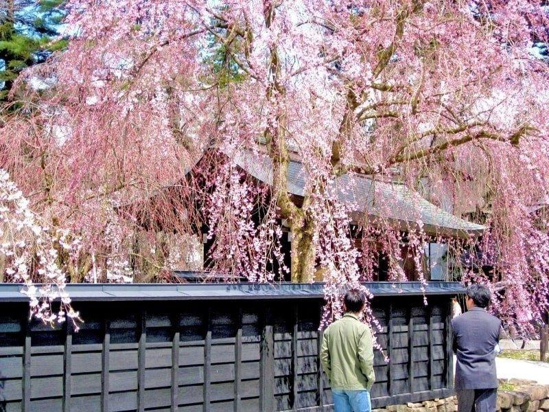 sakura at kakunodate samurai residences