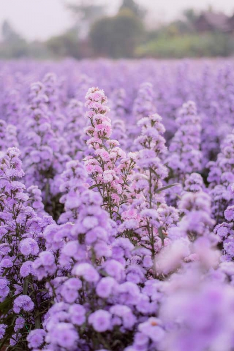 I Love Flower Farm thailand