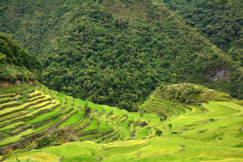 philippines new normal: batad rice terraces