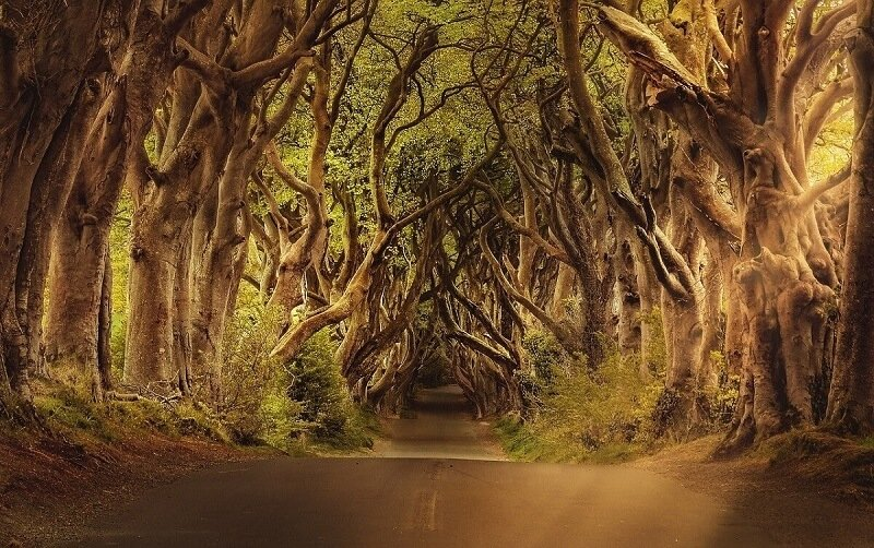 ireland dark hedges