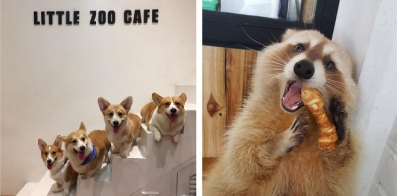 10 Animal Cafés in Thailand You'll Never Want To Leave After Visiting