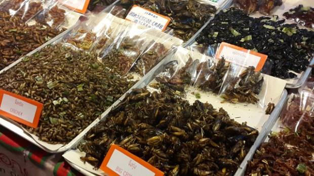 Nên làm ở Chiang Mai: Ăn côn trùng