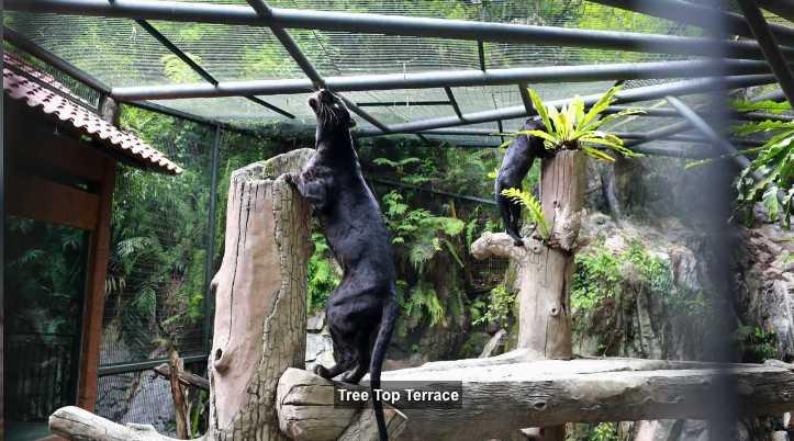 Kuala Lumpur zoo