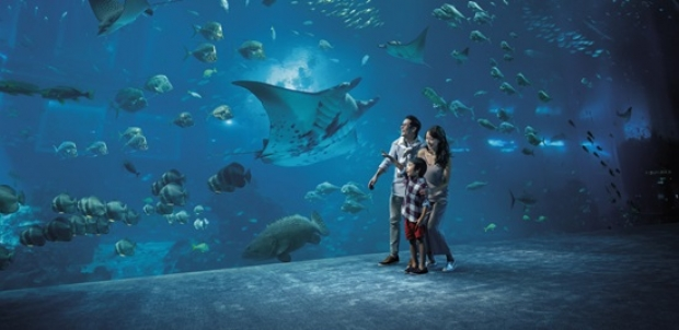 S.E.A. Aquarium + The Maritime Experiential Museum and Typhoon Theatre Adult One-Day Ticket with SGD5 Retail Voucher (min spend SGD35) at SGD41