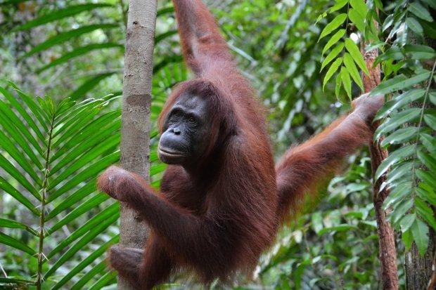 Du Lịch Indonesia: Thiên nhiên hoang dã