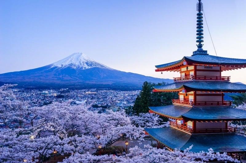 sakura at arakuyama sengen park with arakura fuji sengen shrine and mount fuji