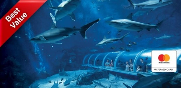 Mastercard® Exclusive: S.E.A. Aquarium + The Maritime Experiential Museum + Typhoon Theatre Adult Dated One-Day Ticket at SGD41