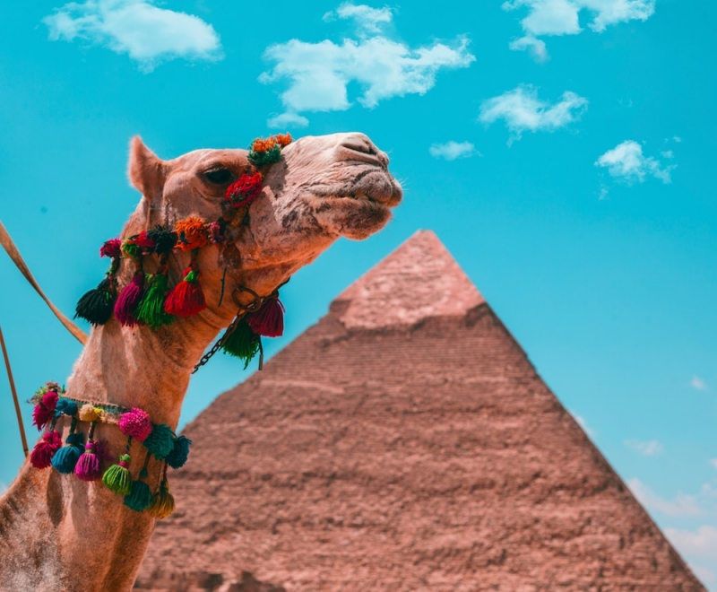 egypt cuts travel cost