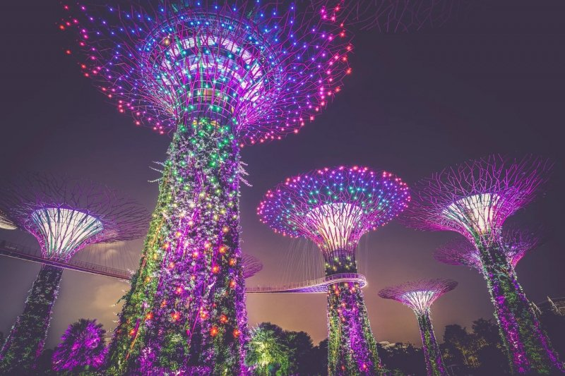 Supertree Grove at night, Gardens by the Bay