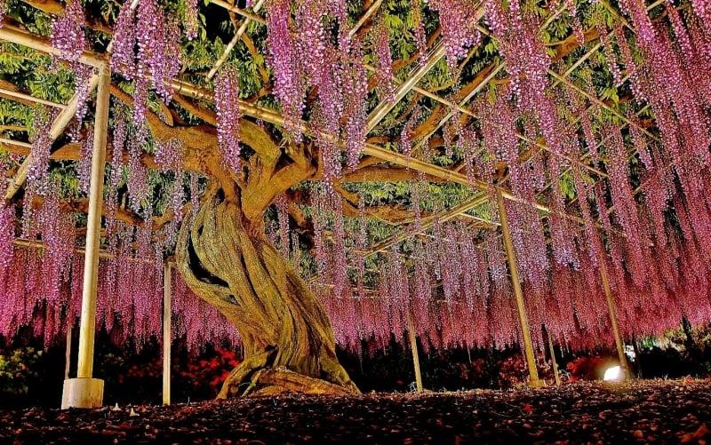 ashikaga flower park at night