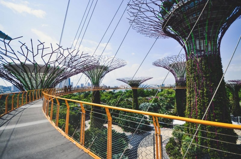 OCBC Skyway at Gardens by the Bay, Supertree Grove