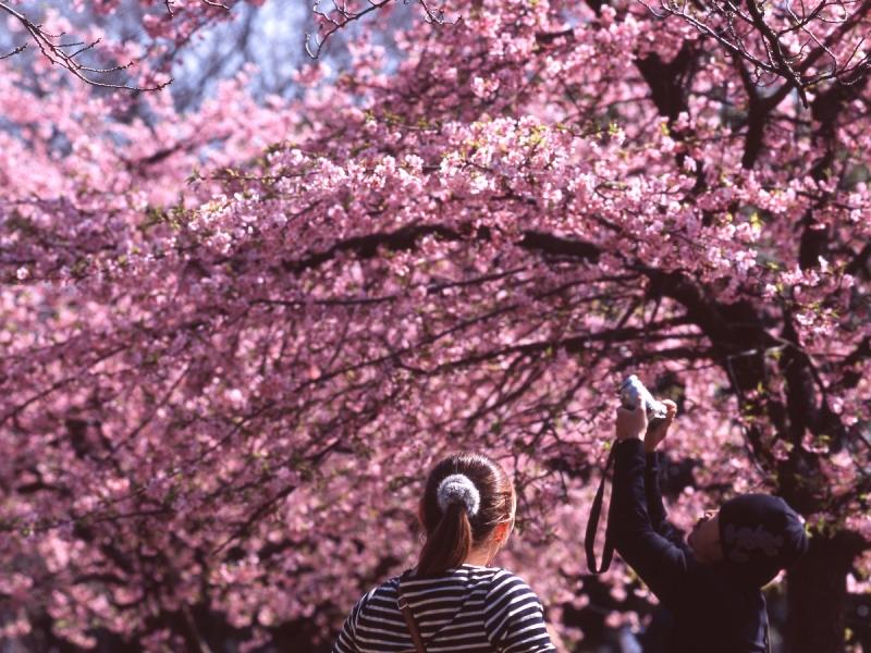 things to do in shibuya: visit yoyogi park