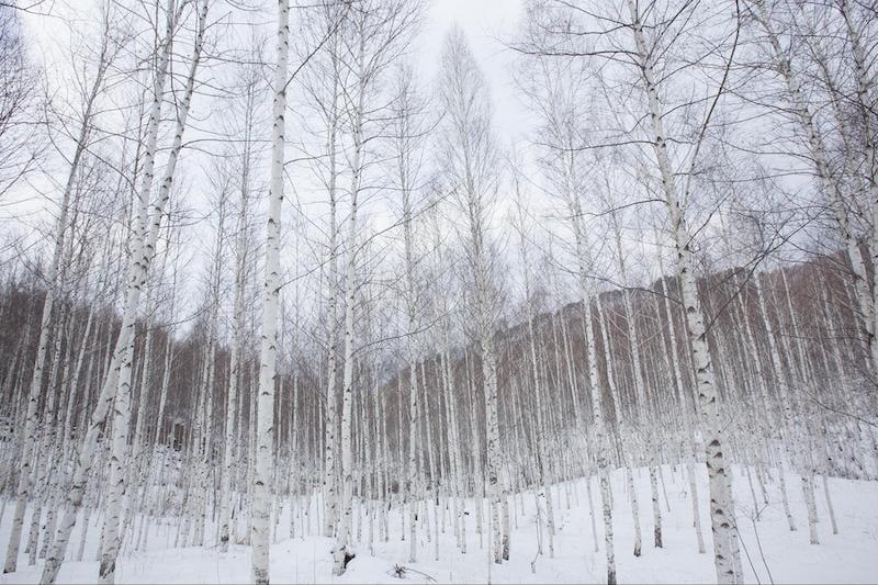 Winter scenery in Gangwon Province