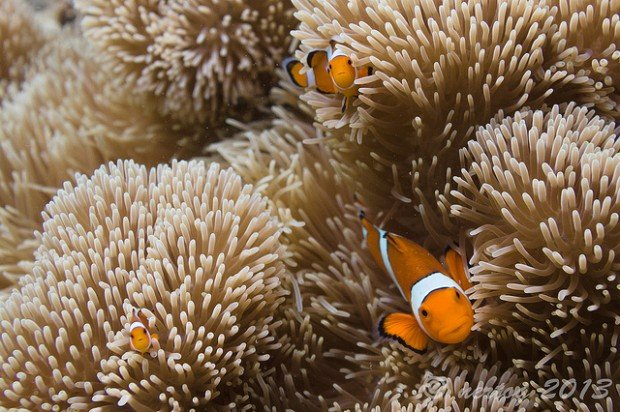 coron marine life