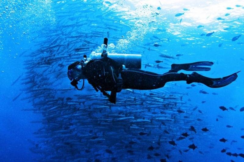 Dive in Sipadan Island, Sabah