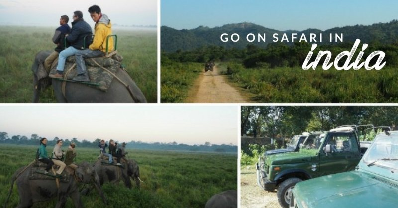 Save Your Africa Flight Tickets! Going on Safari in India is Much More Affordable, Yet Just as Gorgeous