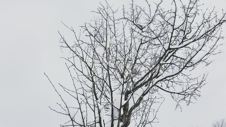 winter experience gifu
