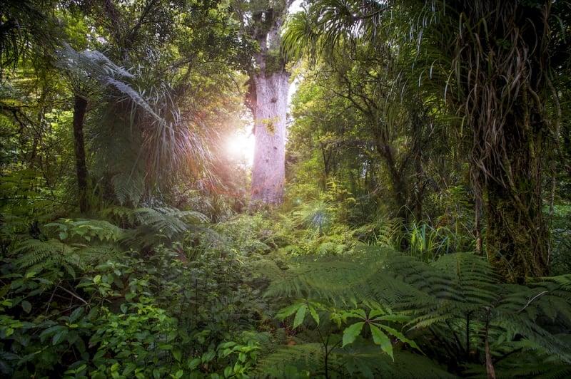 plant tree New Zealand