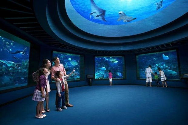 S.E.A. Aquarium Adult One-Day Ticket + S$5 Meal Voucher at S$31 (U.P. S$39)