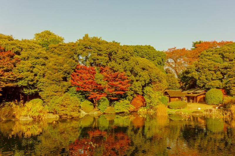 mùa thu Nhật Bản công viên Ueno tráng lệ