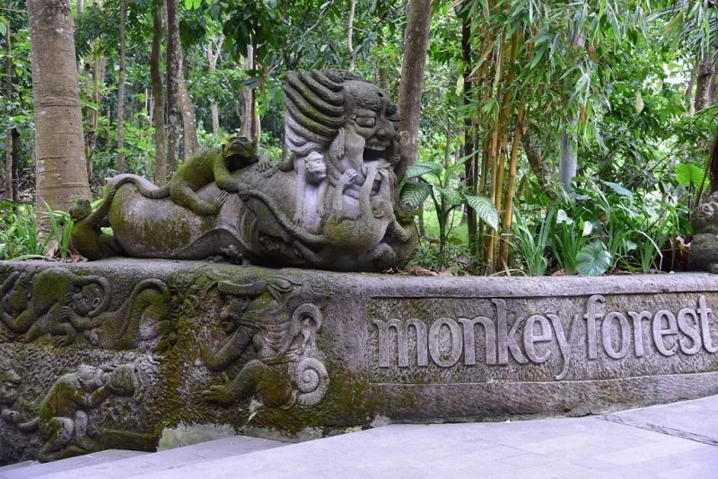 things to do in ubud: monkey forest