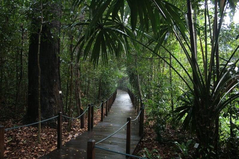 Singapore Botanic Gardens' Rainforest Walking Trail