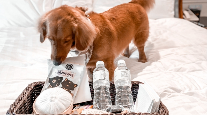 Pet friendly hotel in Singapore: Intercontinental Singapore