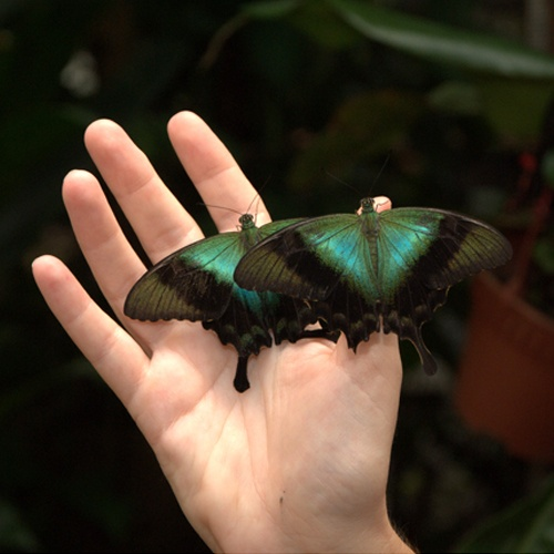 https://www.tripzilla.com/attractions-sentosa-hidden-gems/40514
