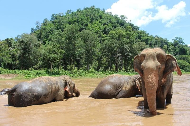 elephants thailand kuwento