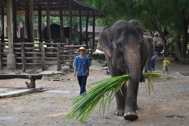 Ang mga Elepante sa Thailand at ang Kanilang Kuwento