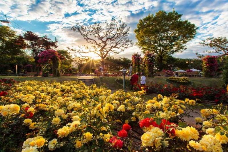 Seoul Grand Park Rose Festival
