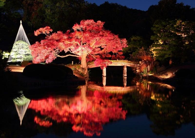 mùa thu Nhật Bản khu vườn Edo Period