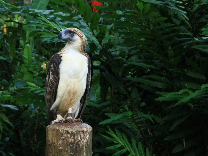 The Philippine Eagle Center