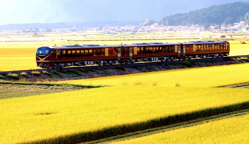 resort minori joyful train passing through rice field