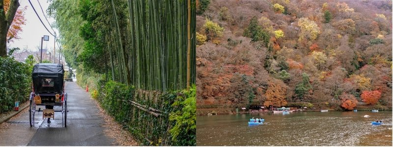 mùa thu Nhật Bản trên tàu Sagano Romantic