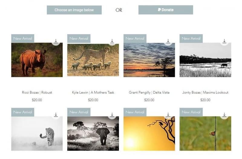 photos for food wildlife photography