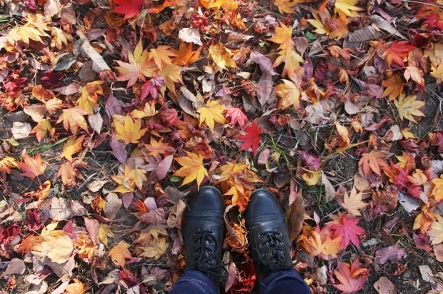 korea autumn photos